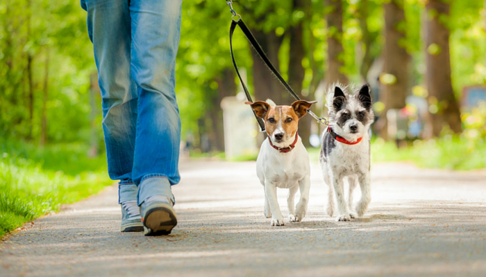 Dog walking services for 1 week Image